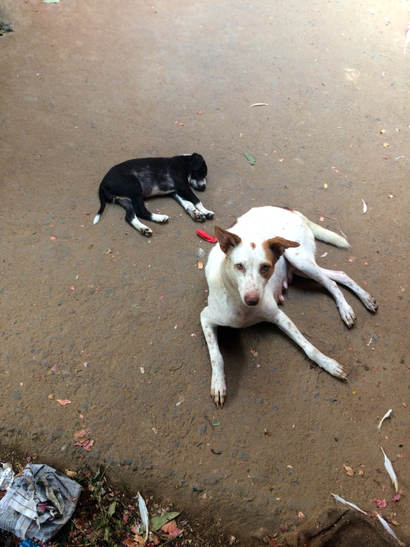 I saw this mom and her babies lying on the side of the spice market in Pondicherry.