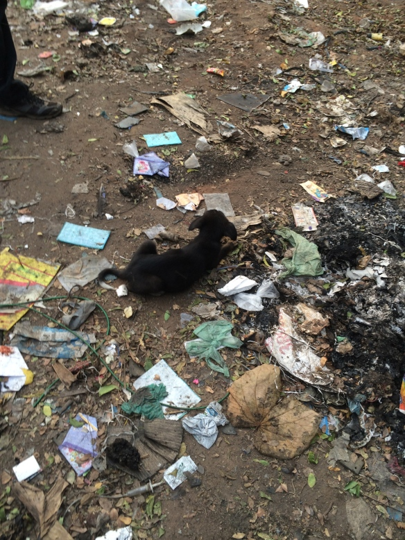 Stray dogs are often found eating garbage to stay alive. This was taken at the Pondicherry dump.