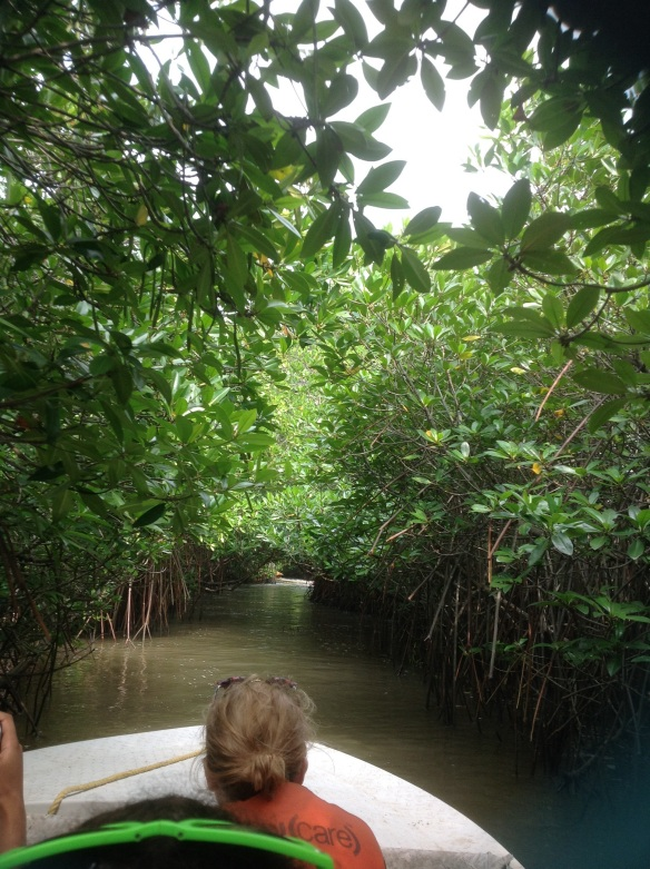 Pichavaram mangrove forest, the second largest in the world